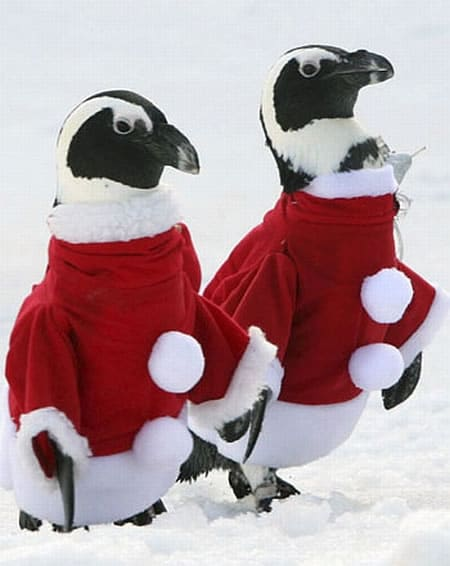 santa-claus-penguins