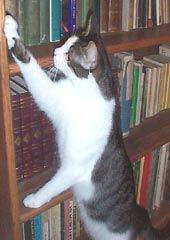 Mauro of Cat's Cradle Books