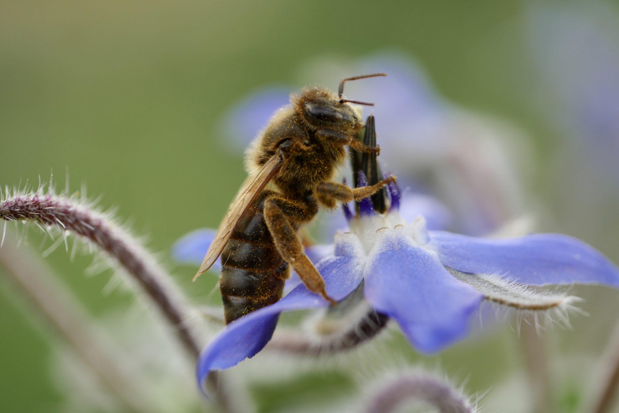 photo reine abeille fleur