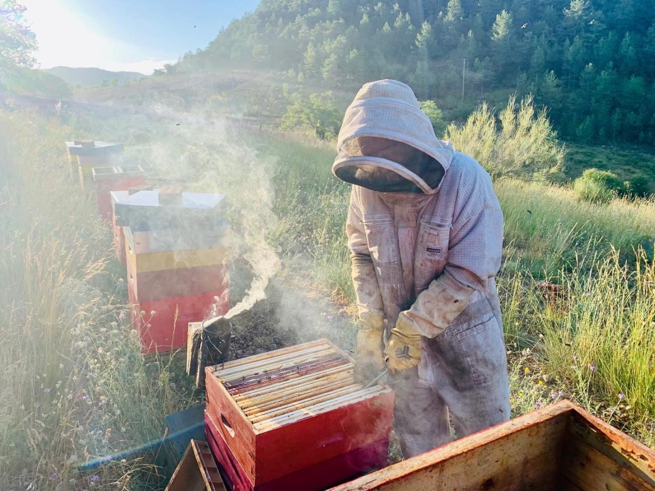 photo récolte miel lavande apiculteur apiculture