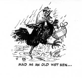 Image result for wet hen