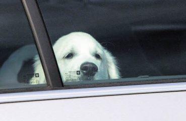 Hitze-Gefahr für Vierbeiner in parkenden Autos