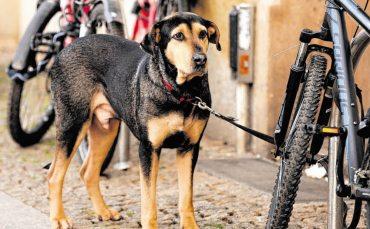 Berliner Hunde kommen an die Leine