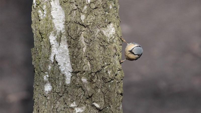 Aktionstag für den Plänterwald