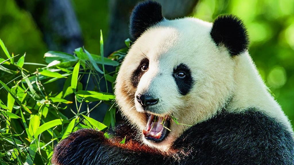 Berliner Zoo feiert seinen 175. Geburtstag
