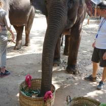 Elefantencamp, Mekong Pearl, Flusskreuzfahrt, Mekong