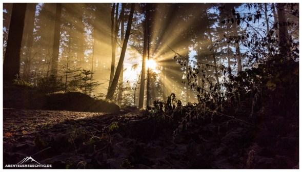 Die Magie des winterlichen Waldes