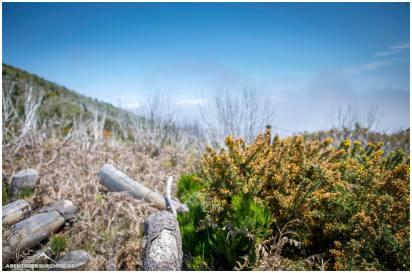 Totholzwald auf Madeira