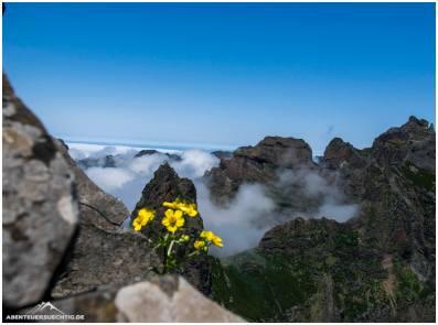 Blümchen auf Madeira