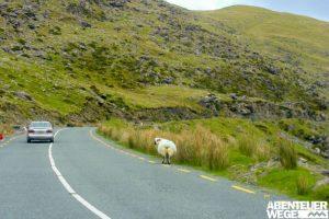 Auto im Linksverkehr auf dem Ring of Kerry, Irland