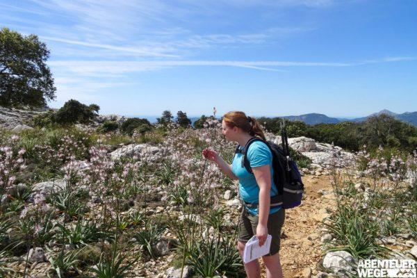 Blühende Wiesen in der Moorlandschaft auf dem GR221, Mallorca