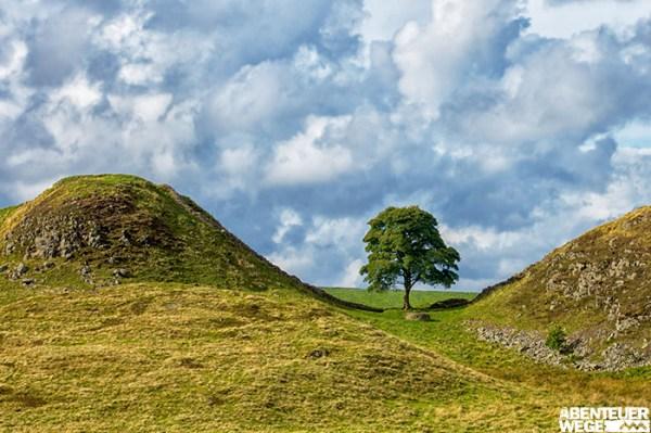 Antike Geschichte trifft wilde Natur am Hadrianswall