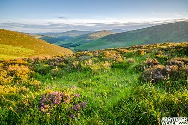 Grünende und blühende Landschaft in den Wicklow Mountains