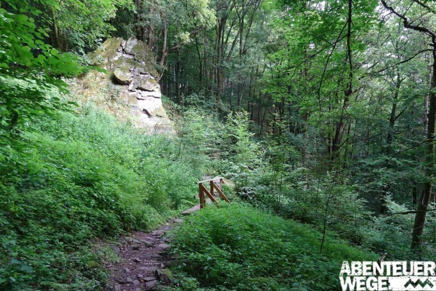 Waldweg am Saar Hunsrück Steig