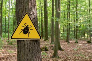 Vorsicht Zecken Schild im Wald