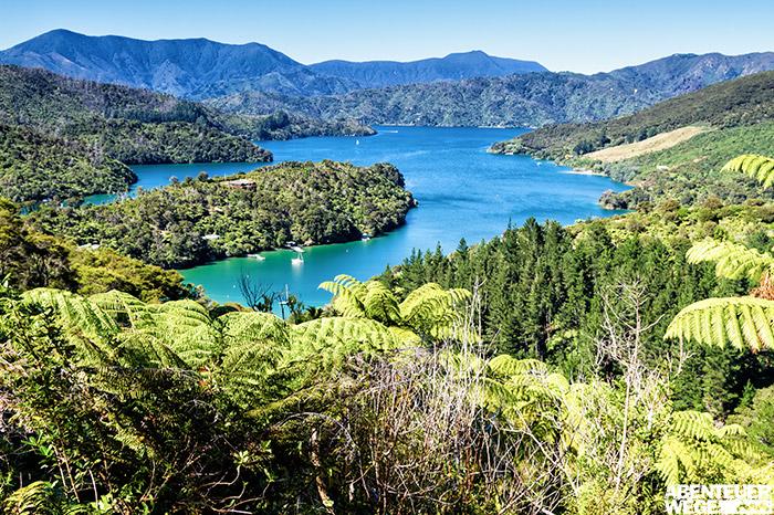 Queen Charlotte Track in den Marlborough Sounds auf der Südinsel Neuseelands