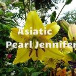 Pearl Jennifer