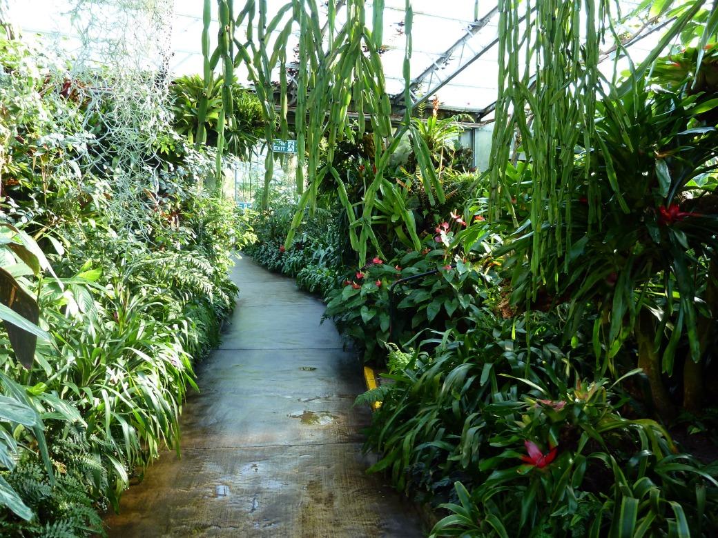 duthie park winter gardens 012 aberdeen gardening