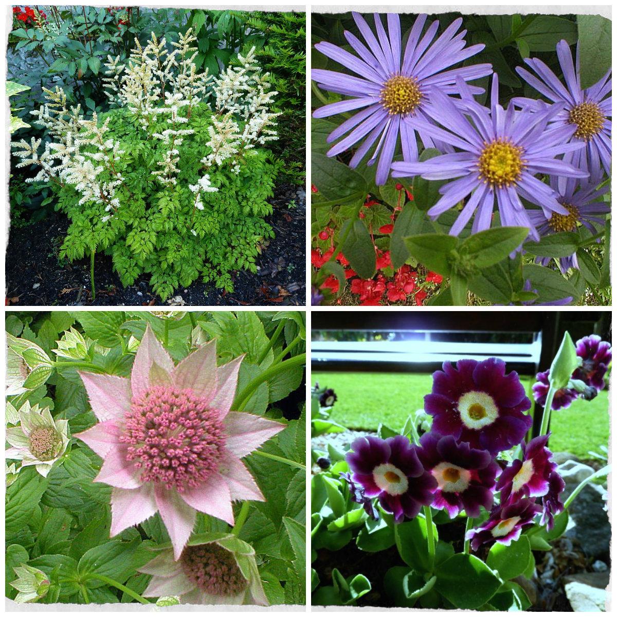 Back garden july 12th 7 aberdeen gardening - Collage 3 Collage 2 Collage