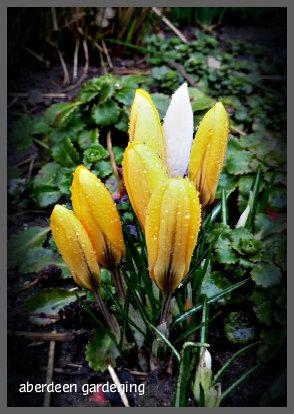 February in the garden 007