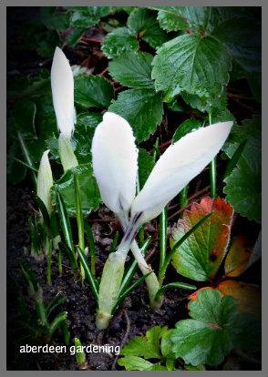 February in the garden 014