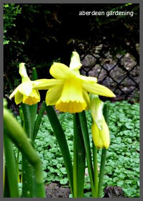 February in the garden 037