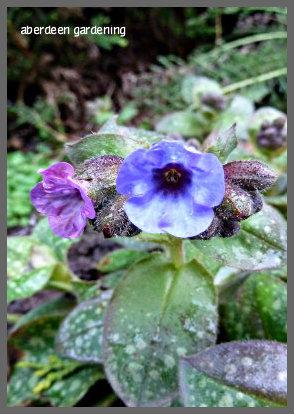 February in the garden 041