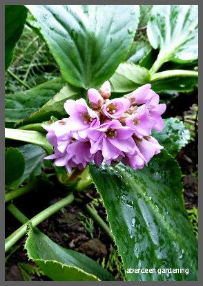 February in the garden 048