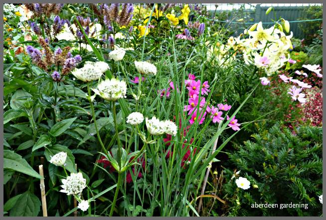 Back garden July24th (19)