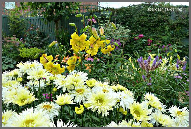 Back garden July24th (26)