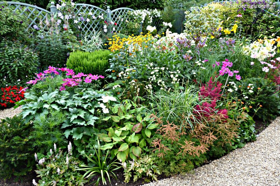 Back garden July24th (3)