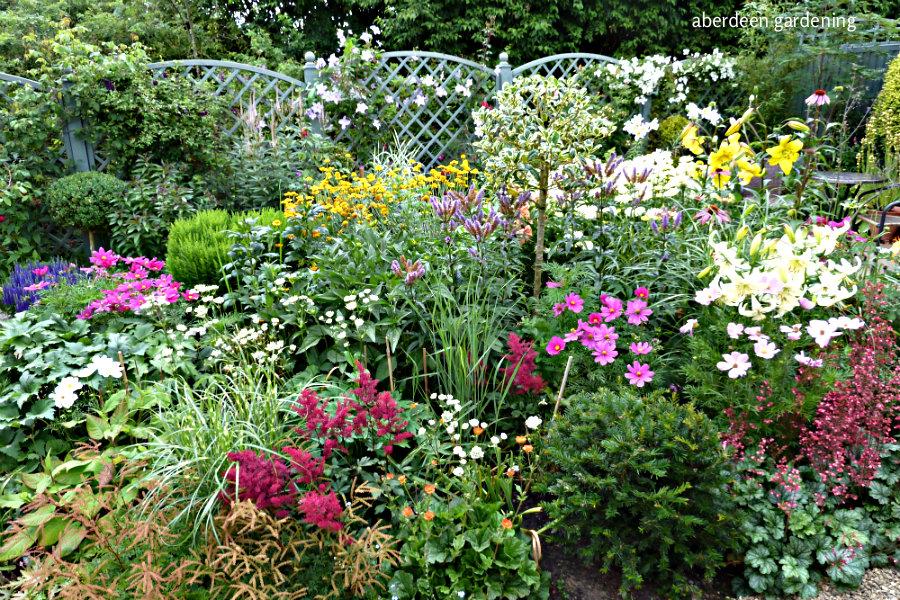 Back garden July24th (5)