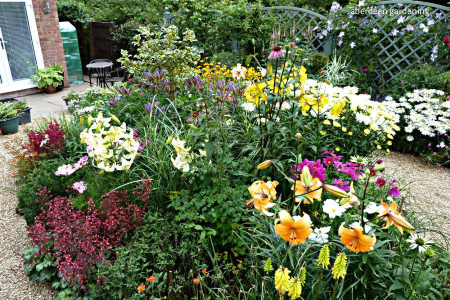 Back garden July24th (6)