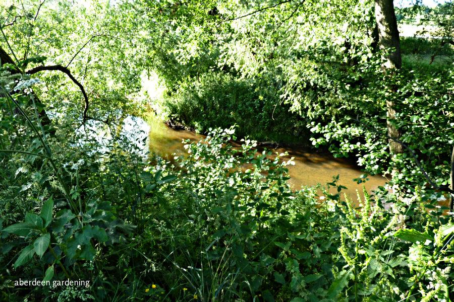 The Dane Meadow (7)