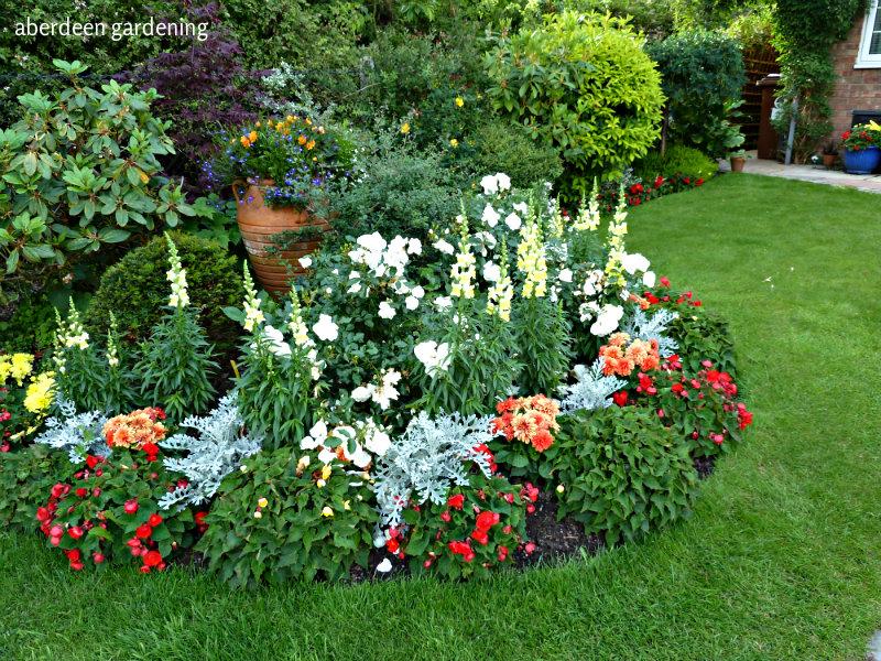 Front garden late June (3)