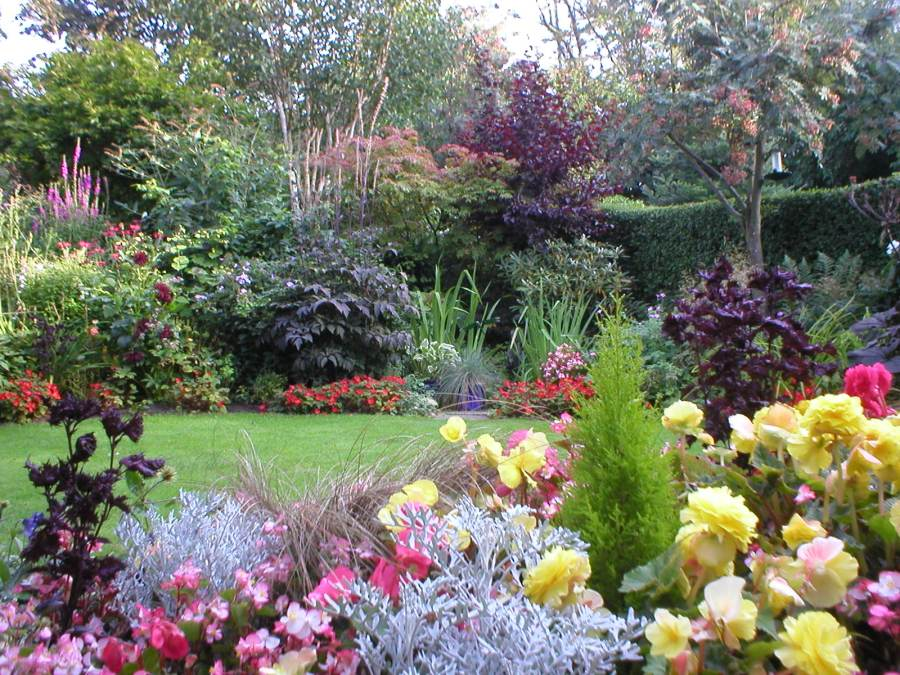 Our Aberdeen back garden in early September