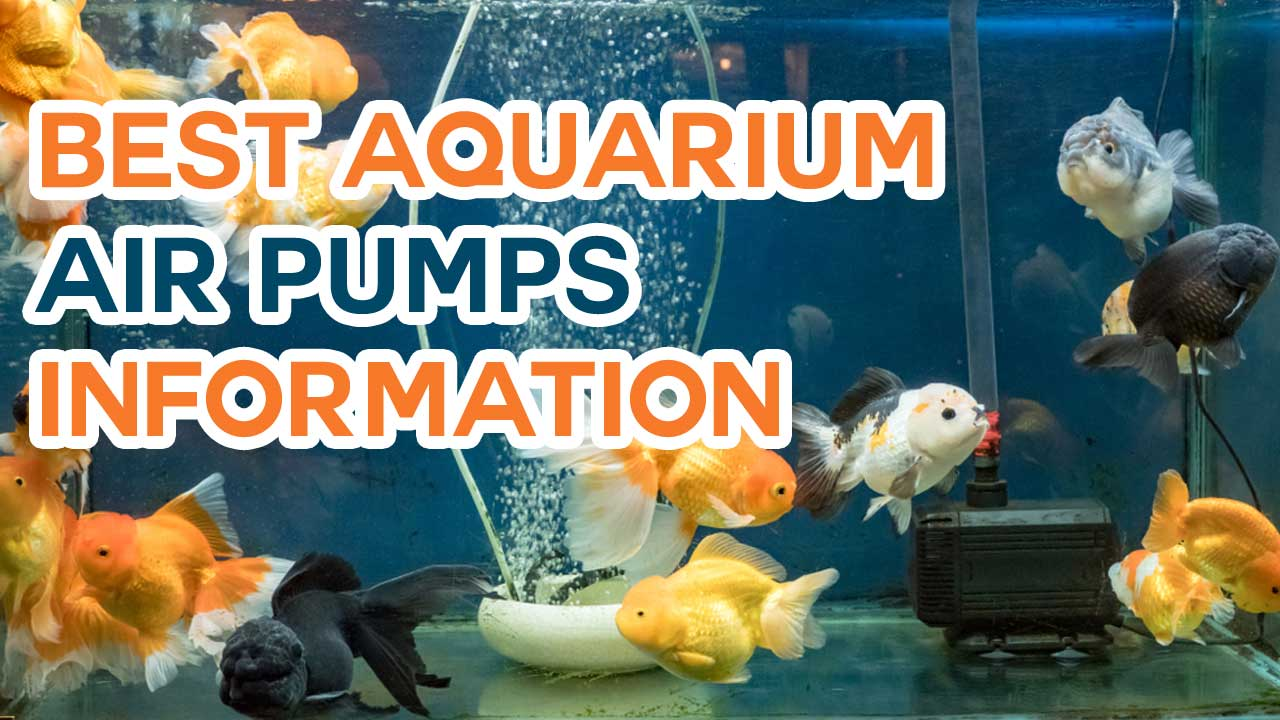 Best Aquarium Air Pumps Which Make Your Mind Better