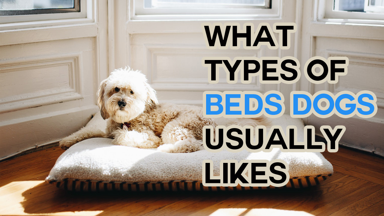 What Types of Beds Dogs Usually Likes