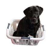 Toby-Laundry-Basket