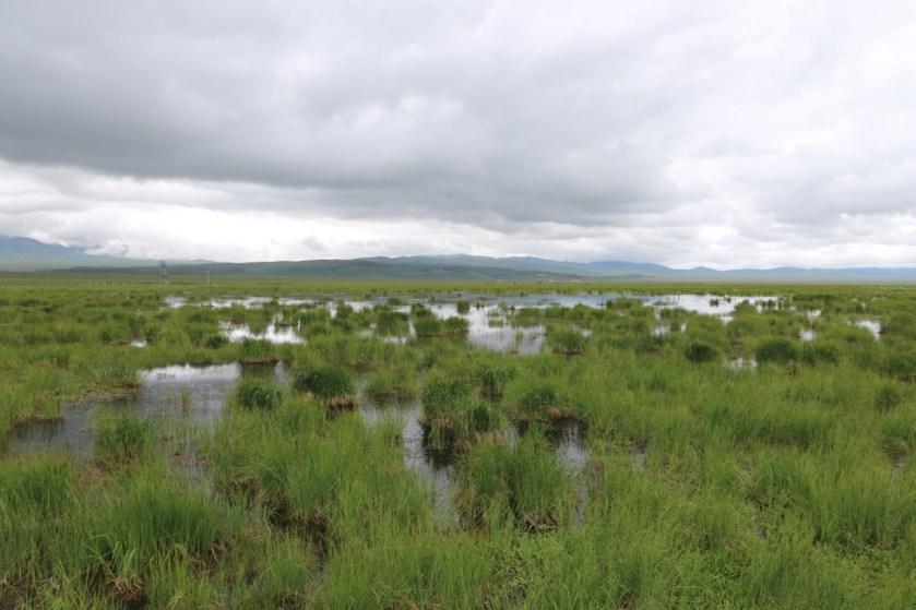 Zoige Wetland National Park