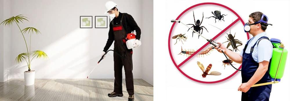مكافحة حشرات بالرياض
