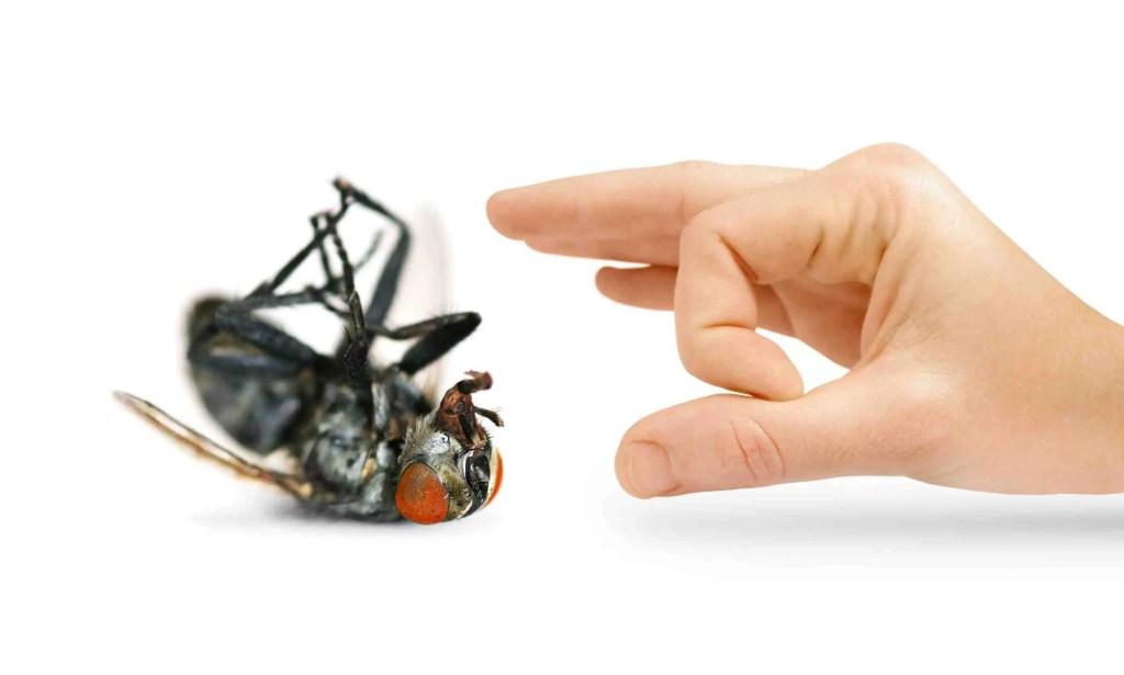 رش الدفان اصبح ضرورة للتخلص من النمل الابيض 10.29_PestControl
