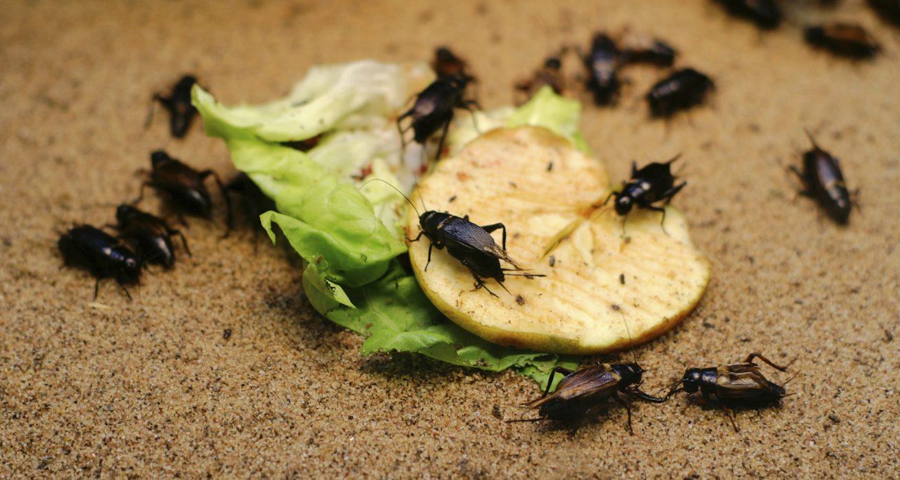 شركة مكافحة الحشرات بالرياض