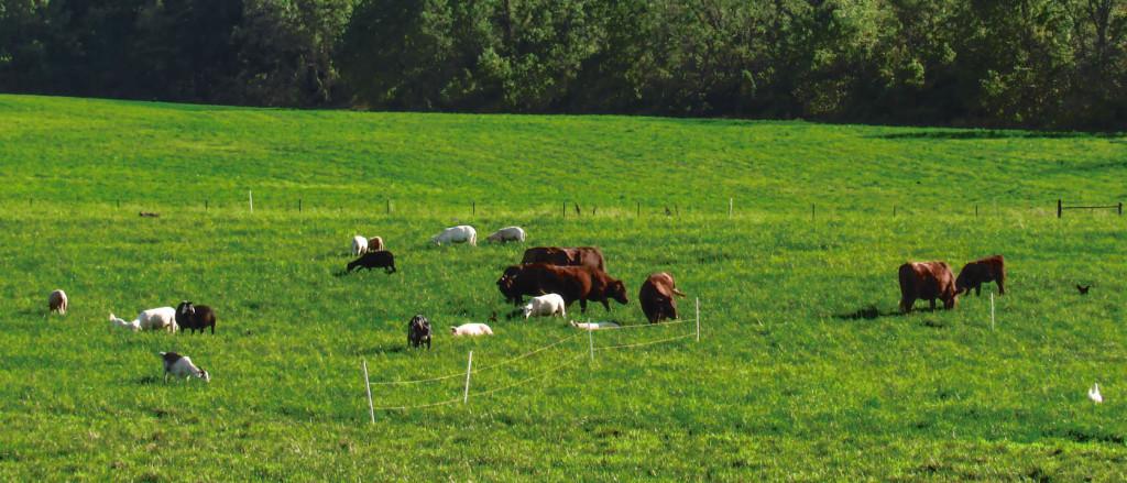 Abiding Acres Farm Photo