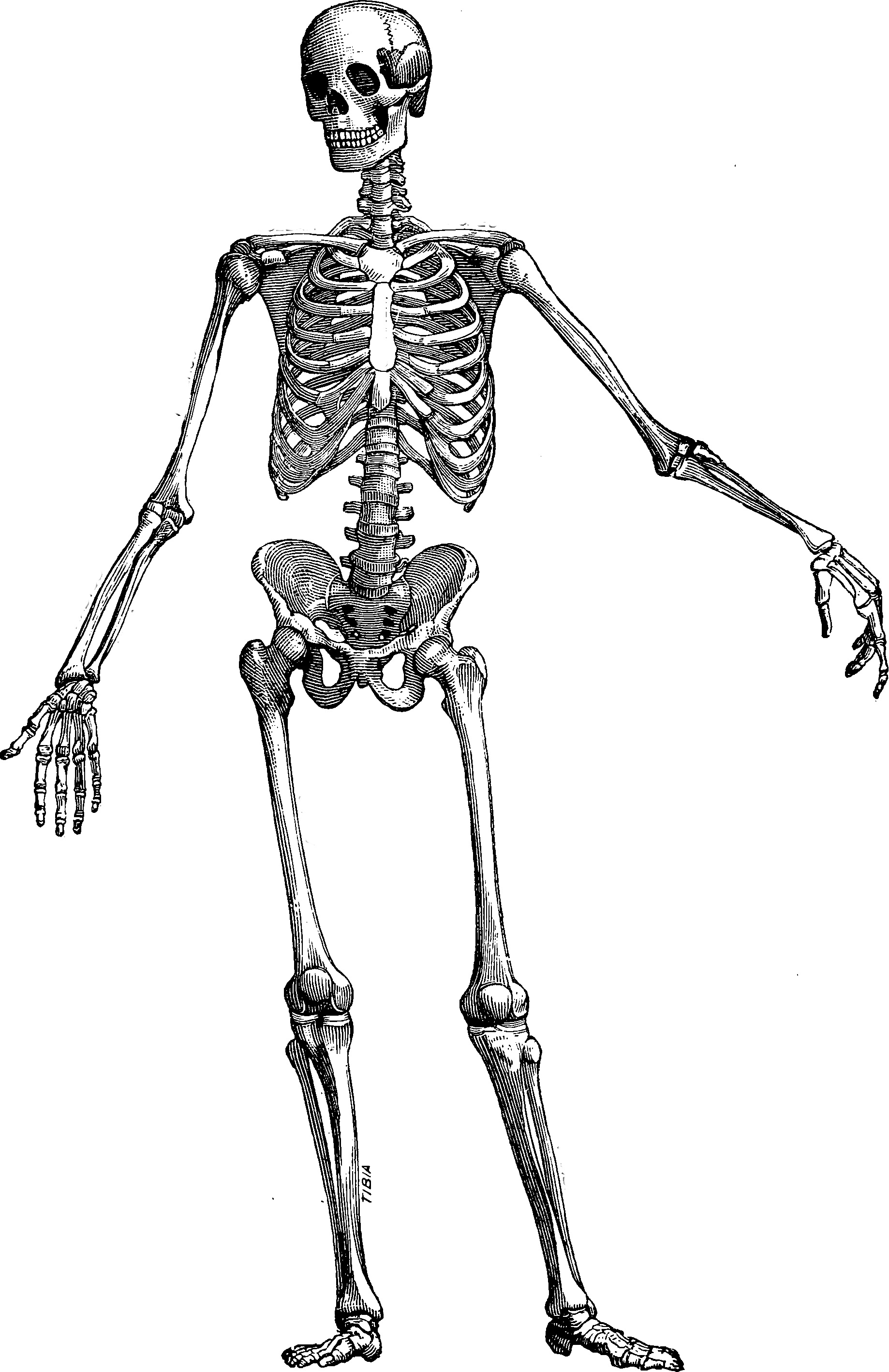 The Skeleton Key Anchor
