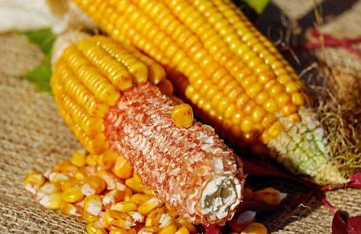 corn-1722245__340.jpg
