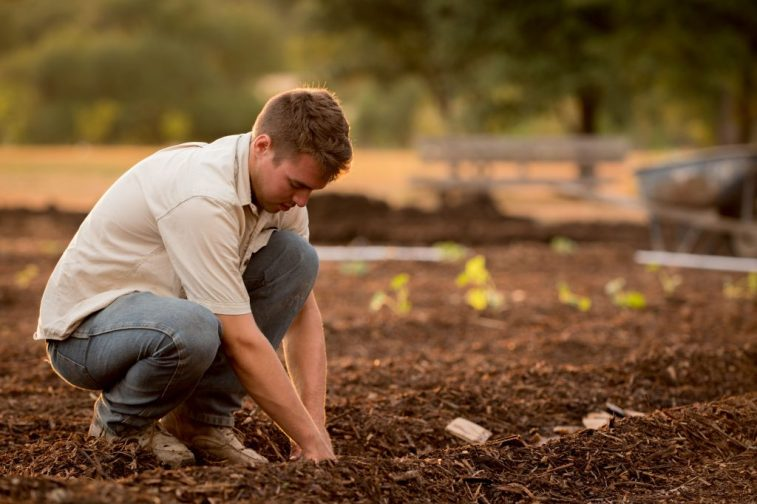 Man planting little territory