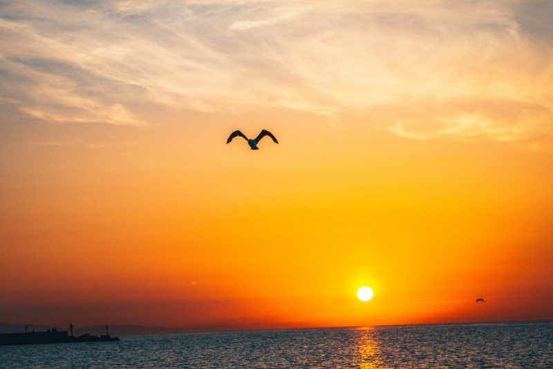 Sun of righteousness will rise with healing in its wings. Malachi 4:2