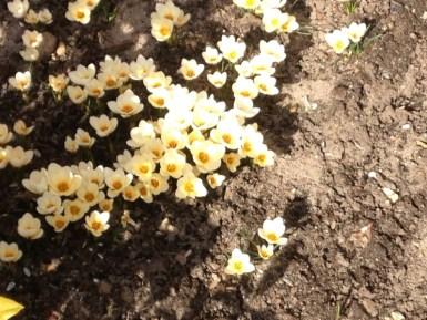 Forårets tegn