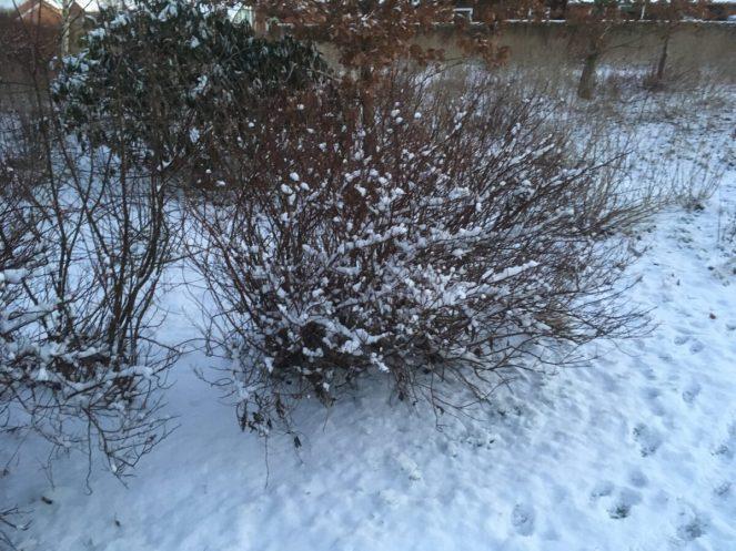 5. jan - sne dejligt
